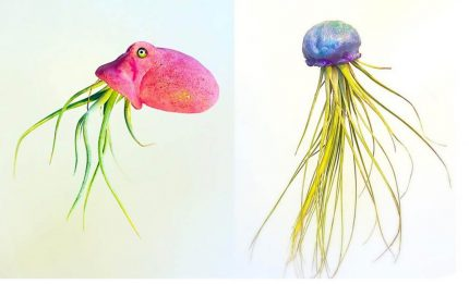 lish jellyfish 430x261 - Plants in Disguise